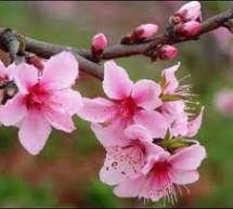 Mục sư Nguyễn Bá Quang: Nếp Sống Nên Thánh Và Tin Kính