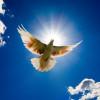 Công Việc Của Đức Thánh Linh