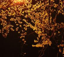 Linh Cương: Đêm Xuân Thức Trắng Canh Dài