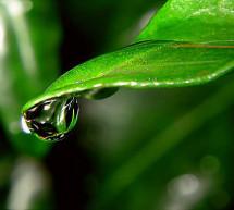 Thanh Hữu: Như Giọt Nước
