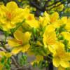 Mục sư Nguyễn Thỉ: Mùa Xuân Bất Tận