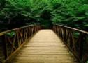 Chiếc Cầu Vượt Trên Dòng Giông Tố