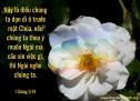 Lời Chúa Mỗi Ngày: I Giăng 5:14