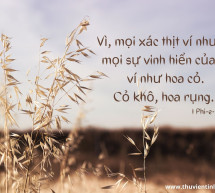 Lời Chúa Mỗi Ngày: I Phi-e-rơ 1:24