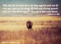 Lời Chúa Mỗi Ngày: I Phi-e-rơ 5:8