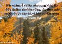 Lời Chúa Mỗi Ngày: Cô-lô-se 2:7