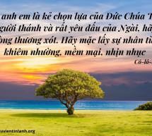 Lời Chúa Mỗi Ngày: Cô-lô-se 3:12