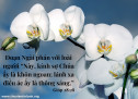 Lời Chúa Mỗi Ngày: Gióp  28:28