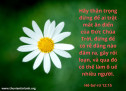 Lời Chúa Mỗi Ngày: Hê-bơ-rơ 12:15