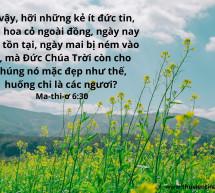 Lời Chúa Mỗi Ngày: Ma-thi-ơ 6:30