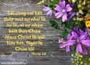 Lời Chúa Mỗi Ngày: Phi-líp 3:8