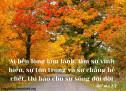 Lời Chúa Mỗi Ngày: Rô-ma 2:7