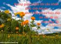 Lời Chúa Mỗi Ngày: Thi Thiên 118:5