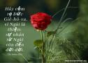 Lời Chúa Mỗi Ngày: Thi Thiên 136:1