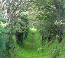 Thánh Ca: Bước Gần Chúa Hơn – Just a Closer Walk with Thee