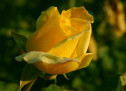 Mục sư Võ Ngọc Thiên Ân: Phúc Âm Của Tình Yêu