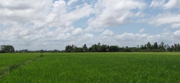 Ẩn Dụ Cỏ Lùng Và Lúa Mì