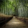 Tường Lưu: Chúa Vui Vẻ Về Sự Ngay Thẳng
