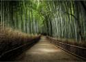 Tường Lưu: Lãng Tử Về Nhà