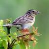Thánh Ca: Chim Sẻ Mắt Chúa Vẫn Chú Vào