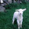 Về Đây Hỡi Chiên Xa Bầy