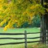 Tường Lưu: Hàng Rào Chúa Dựng