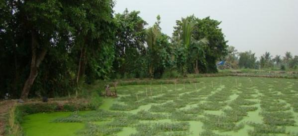 Tùng Sơn: Tình Quê