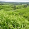 Tường Lưu: Gieo Giống Chi, Gặt Giống Ấy