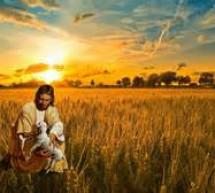 Sự Cung Liệu Của Chúa