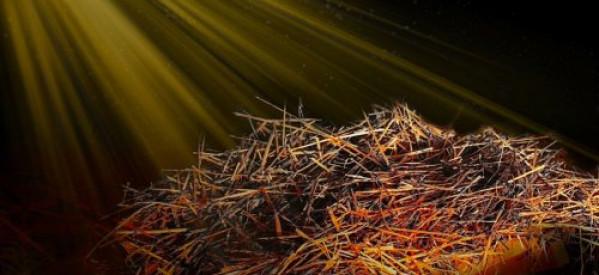 Cùng Học Kinh Thánh – Phúc Âm Lu-ca