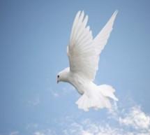 Thánh Ca: Thánh Linh Dẫn Dắt