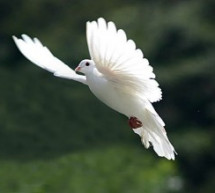 Mục sư Đặng Ngọc Báu: Khi Đức Thánh Linh Thăm Viếng