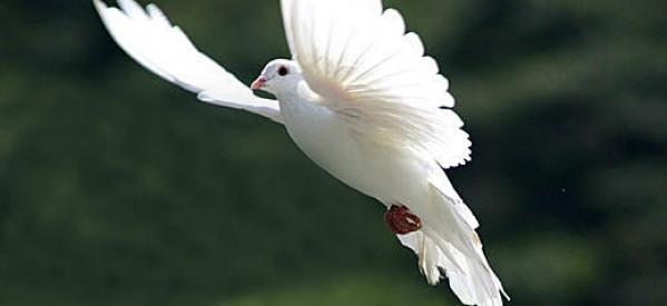 Mục sư Võ Ngọc Thiên Ân: Đức Thánh Linh