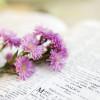 Tìm Hiểu Thánh Kinh: Khải Huyền 2:1-7