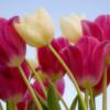 Xuân Về Tạ Ơn Chúa