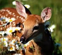 Vui Mãi Mùa Xuân
