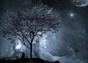 Thánh Ca: Đêm Yên Lặng – Silent Night
