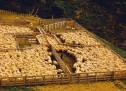 Thánh Ca: Kìa, Chín Mươi Chín Chiên