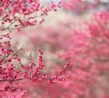 Chúa Là Mùa Xuân