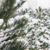 Chương Trình Nhạc Giáng Sinh: Home for Christmas