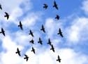 Thánh Ca Peru: Như Cánh Chim Bay Lên