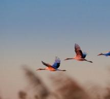 Thánh Ca: Như Cánh Chim Bay Lên – Flee As a Bird