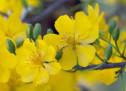 Vọng Cổ: Mừng Xuân