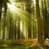 Thánh Ca: Ánh Sáng Tuyệt Vời