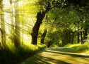 Thánh Ca: Cầu Xin Chúa Dẫn Dắt Con – Guide Me O Thou Great Redeemer