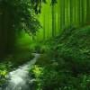 Tường Lưu: Yên Nghỉ