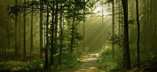 Mục sư Võ Ngọc Thiên Ân: Sự Sống Đời Đời