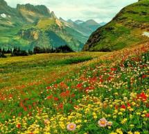 Linh Cương: Mùa Xuân Thanh Sảng