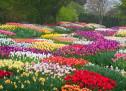 Trần Thượng Trí: Mùa Xuân Vĩnh Viễn
