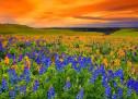 Chương Trình Mừng Chúa Phục Sinh (2021) – Hội Thánh Thanh Lễ – California